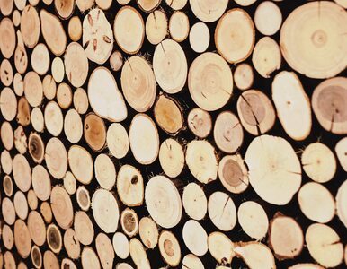Mieszkanie Plus z drewna. Nowe prawo wchodzi w życie