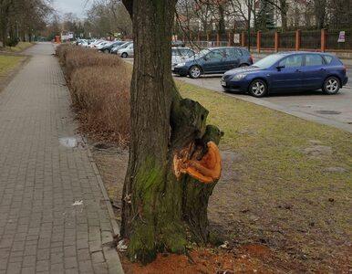 """Martwa wiewiórka miała symbolizować """"Lex Szyszko"""". Zweryfikowaliśmy –..."""