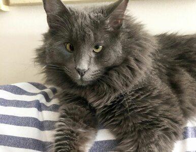 Kot z zezem podbija internet. Właścicielka dała mu nietypowe imię