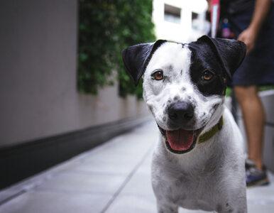 Trzy lata temu jej pies zaginął. Odnalazła zwierzę dzięki nietypowej...