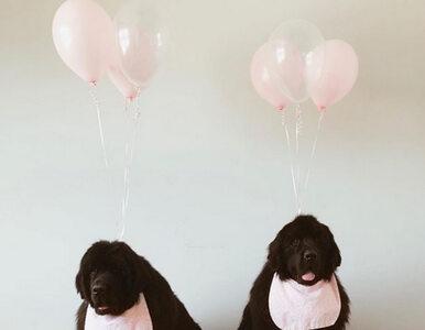 Sportowiec pochwalił się zdjęciem psów i radosną wiadomością. Zwierzęta...