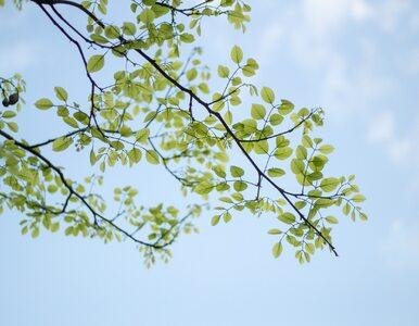 Pozytywny skutek pandemii? Pulmunolog: Mniej zanieczyszczeń powietrza, a...