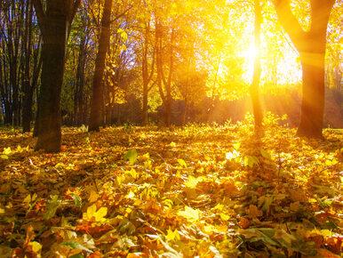 Pogoda na najbliższe dni: Złota polska jesień nigdzie się nie rusza