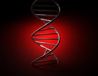 """Przełom w nauce? """"Śmieciowe"""" DNA ważniejsze niż sądzono"""