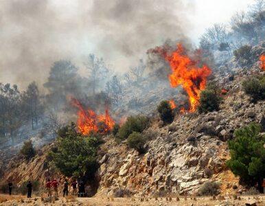 Straszne pożary trawią Portugalię - strażacy giną w akcji
