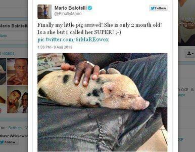Balotelli kupił sobie zwierzątko. Świnię