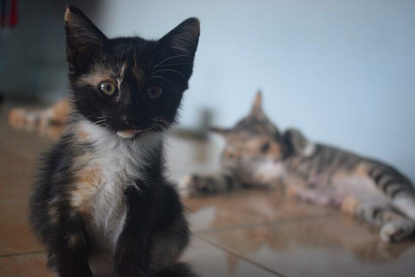 Kot, zdjęcie ilustracyjne