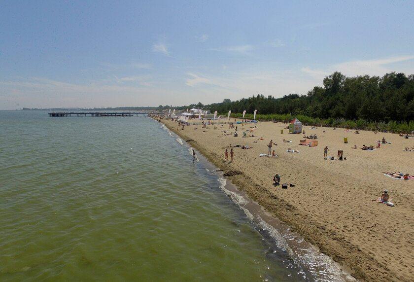 Zakwit sinic nad Bałtykiem