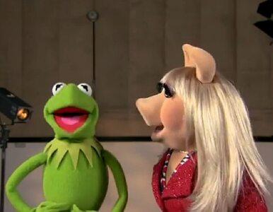 Kermit i Piggy złożyli życzenia Royal Baby