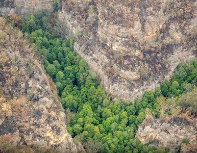 Ten gatunek jest na Ziemi od około 200 mln lat. Australijczycy uratowali...