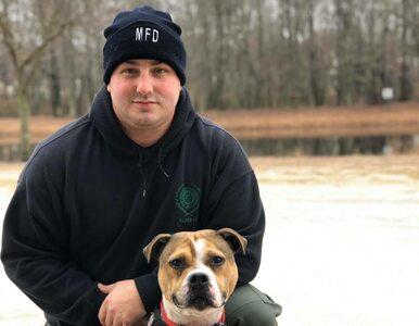 """Pitbull był zmuszany do walki z innymi psami. Teraz został  """"oficerem K9"""""""