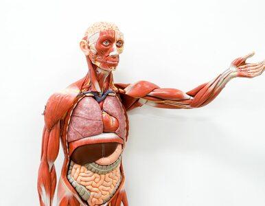 Naukowcy twierdzą, że odkryli nowy narząd w ciele człowieka. Jest...