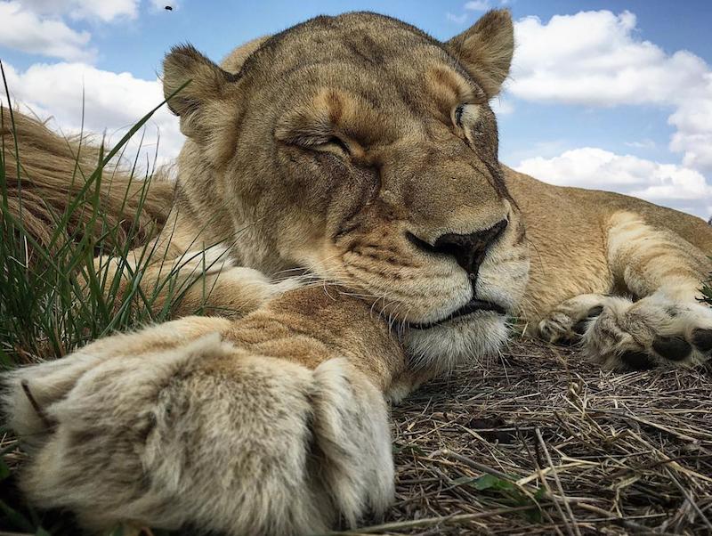 Rezerwat przyrody w RPA