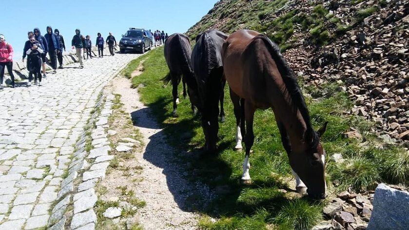 Konie, które uciekły z hodowli