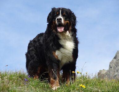 Popularne smakołyki dla psów skażone salmonellą