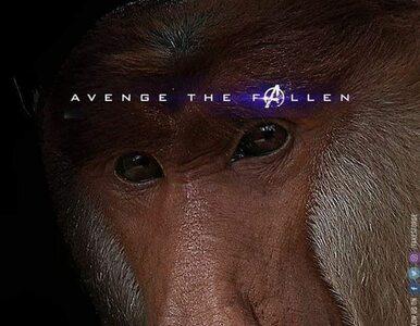 Dziesiątki memów jeszcze przed premierą filmu? Fenomen Avengersów nie...