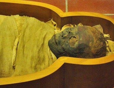 Na wystawie…proszek z mumii