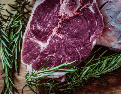 Dieta karniwora – coś dla miłośników mięsa?